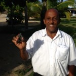 Baby turtles hatched on the beach at Jamaica Inn